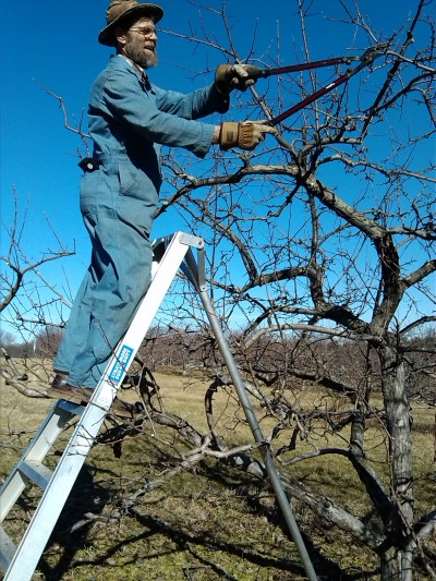 Brad pruning.jpg